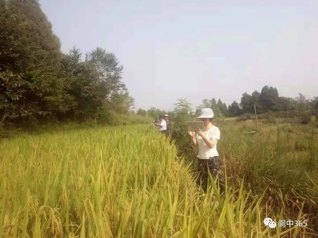 河溪街道:开展化肥农药减量增效 推进绿色发展工作